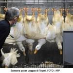 Jenis Flu Burung Baru Bisa Ditularkan Antarmanusia