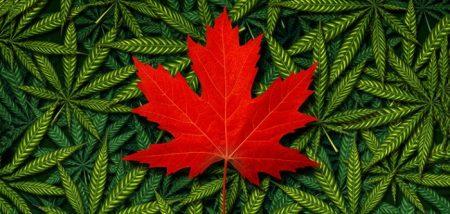 Kanada Legalkan Ganja Untuk Rekreasi
